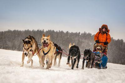 Mush-Do: Here's Your Chance to Go Dogsledding in the Boundary Waters