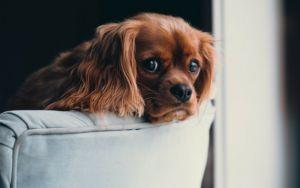 How CBD Oil Can Help Your Dog's Separation Anxiety