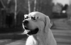 The Truth About Color Blindness In Dogs