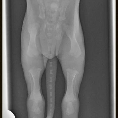 Top Veterinary Articles of the Week: Hip Dysplasia, Constipation, and more
