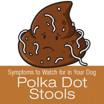 Symptoms to Watch for in Your Dog: Polka Dot Stools