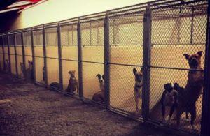 """More Than 30 Shelter Dogs Show Symptoms Of Potentially Deadly """"Strep Zoo"""" Infection"""