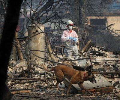 """Donald Trump Called For """"Raking Forest Floors"""" During His California Wildfire Zone Visit"""