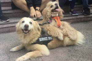 Blind Rescue Dog Has His Very Own Seeing Eye Dog