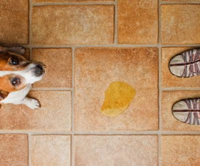The Best Flooring for Dogs -and How to Protect Your Floors From Damage