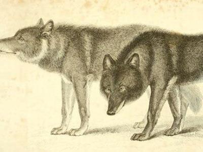 Fatal Wolf Hybrid Attacks - The Archival Record