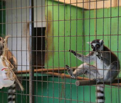 Animal Advocates Announce Intent to Sue Maryland Roadside Zoo for Violating Endangered Species Act and State Animal Cruelty Law