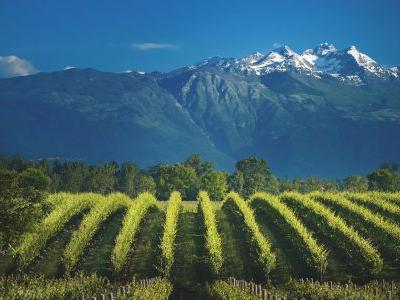 What You Need to Know About Prosecco DOC