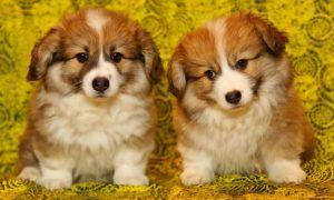 Would You Clone Your Dog If You Could Afford It?