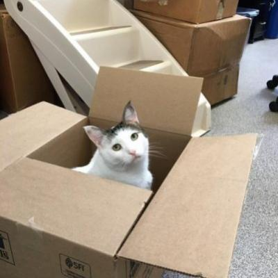 Hazel is all packed up and ready to go! The adoption event