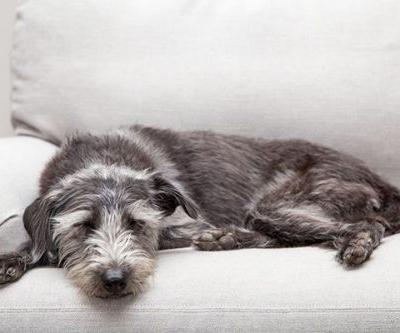 Are You Ready to Adopt a Dog? Here's How to Find Out