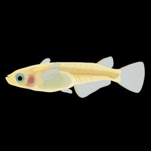 A Fish Tale: Centromeres Prove Central to the Divergence of a Species