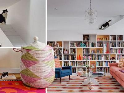 Couple redesign their home to make it the perfect place for cats and books