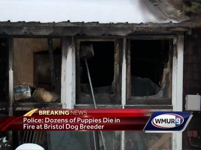 Dogs, puppies killed in Bristol fires