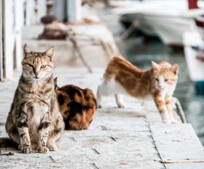 Get paid to hang out with 55 cats on a gorgeous Greek island