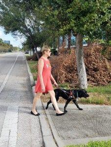 After the Storm with My Guide Dog