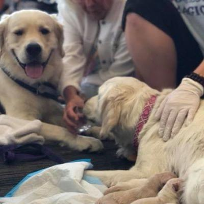 Emergency crew jumps in to assist service dog needing help before boarding flight