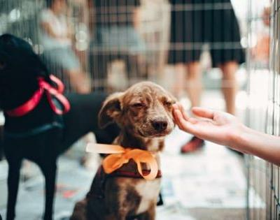 Adopting a Dog - What You Need to Know