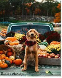 Six Tips for a Safe Thanksgiving with your Dog and Cat