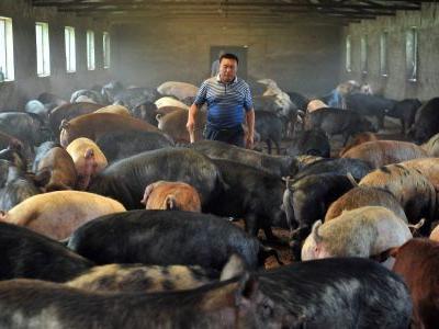China uses AI, facial recognition, and blockchain to monitor its farms - but it still can't stop the gruesome swine fever that will leave 200 million pigs dead