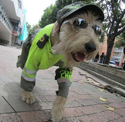 Street Dog Becomes Colombia's Cutest Canine Cop