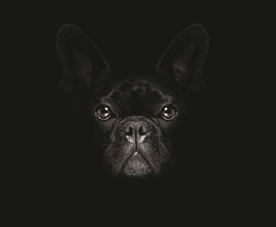 Why We Love Black Dogs