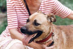 What Pet is Right for Me? How to Choose a Dog