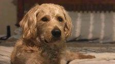 Family Who Survived Vegas Attack Says Their Comfort Dog Has Been Shot, Killed
