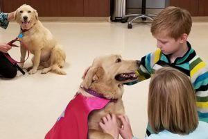 Dog Recieves Kidney From One Of Her Pups In Rare Transplant Surgery