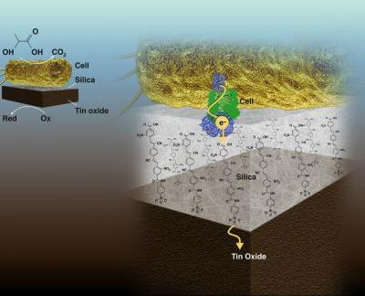 Separate But Together: Ultrathin Membrane Both Isolates and Couples Living and Non-Living Catalysts