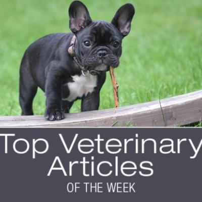 Top Veterinary Articles of the Week: Blastomycosis, Ear Problems, and more