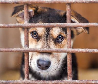 "Animal Legal Defense Fund Announces Resolution of Lawsuit Against Barkworks for Selling Sick ""Puppy Mill"" Puppies"