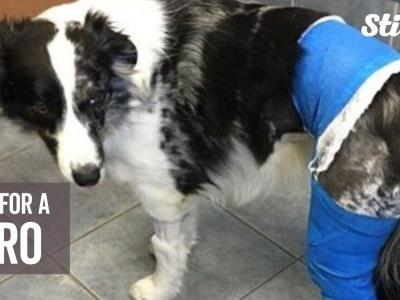 Dog who helped saved family from fire now needs help of her own