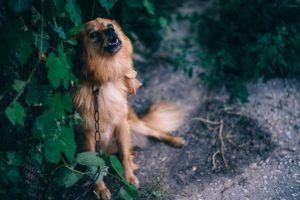 How To Help Your Dog Recover From Past Trauma