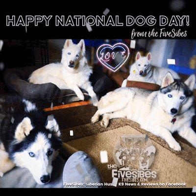 It's a National Howliday for Us Dogs!