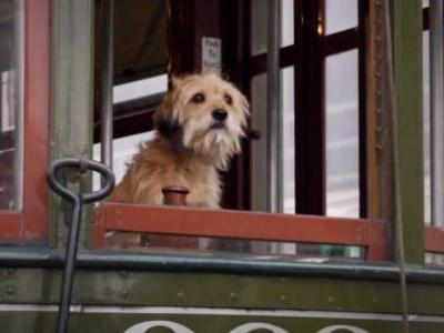 'Benji' Trailer: Netflix Reboots the Lovable Dog Franchise and Keeps it Cheesy
