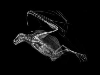 Eerie X-ray images show animals like you have never seen them before