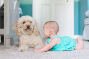 Ready To Introduce A Dog To Baby? These 8 Tips Will Help