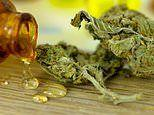 Cannabis oil halts tics of eight-year-old with Tourette's