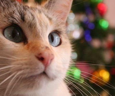 Cat Proofing Your Christmas Tree | Winslow Animal Hospital Dog & Cat