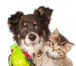 How to Create the Perfect Pet Policy for Your Hotel or Vacation Rental
