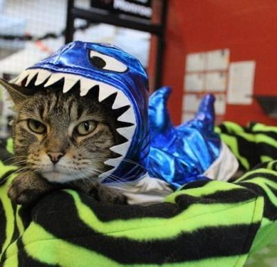 Found my Halloween costume! I look like a real shark don't