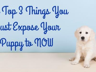 Top 3 Things You Must Expose Your Puppy to NOW
