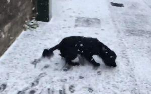 This Dog's Reaction To His First Snowfall Will Make Your Day