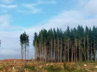 Reduce the risks of windthrow - which trees that can weather a storm