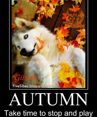 Fall in Love With Autumn on Flashback Friday!