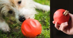 "Originally Built for Shelter Dogs, This ""Odd Ball"" is Now Available Online"