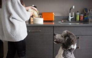 Let Science Uncover The Secret To Your Dog's Ideal Diet - In His Poop!