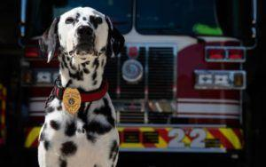 "Georgia Firefighter Remembers Late Dog Who Changed His Life, ""She Was Everything To Me"""
