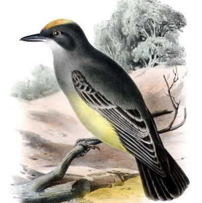 The People Behind the Birds Named for People: John Cassin